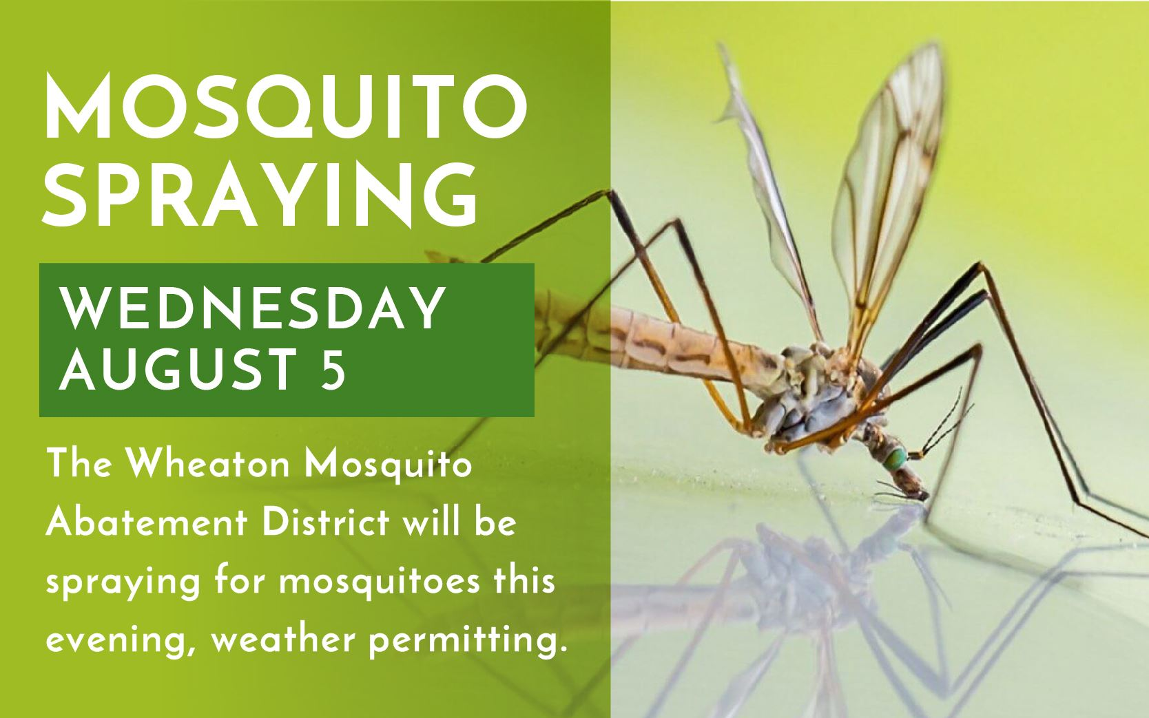 MosquitoAbatement_Artwork080420-01